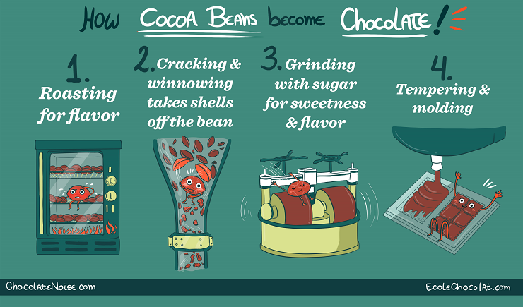 how-cocoa-beans-become-chocolate_740